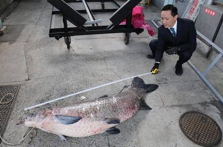 競艇 魚 戸田競艇場 巨大魚